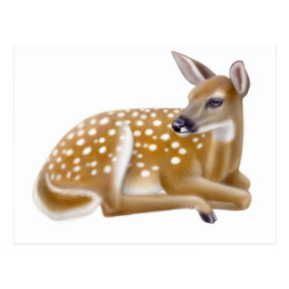 White Tailed Deer Fawn Postcard