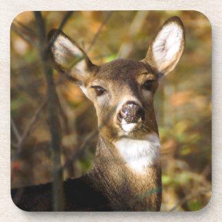 White-Tailed Deer Hard Plastic Coaster