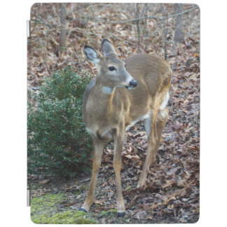 White Tailed Deer iPad Smart Cover iPad Cover
