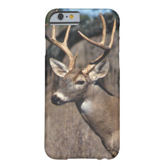 White-Tailed Deer - iPhone 6 case