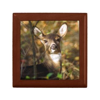 White-Tailed Deer Keepsake Box