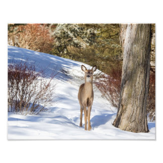 White-tailed Deer Looking At You Art Photo