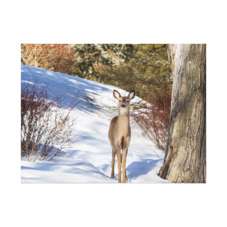 White-tailed Deer Looking At You Canvas Print