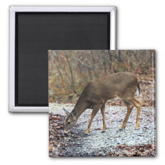 White-Tailed Deer Magnet