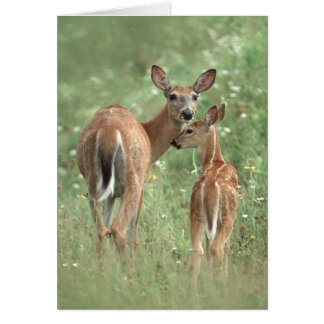 White-tailed deer mother and fawn card