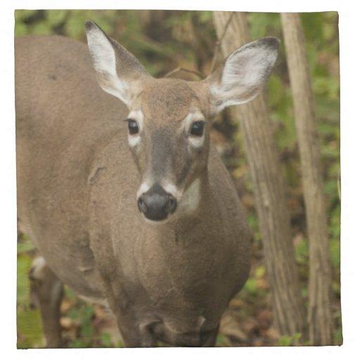 White Tailed Deer Napkins