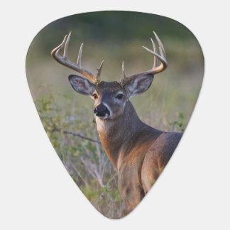 white-tailed deer Odocoileus virginianus) 2 Guitar Pick