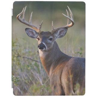 white-tailed deer Odocoileus virginianus) 2 iPad Cover