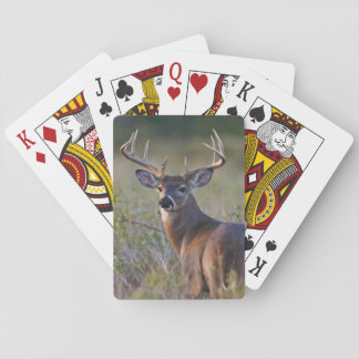 white-tailed deer Odocoileus virginianus) 2 Playing Cards
