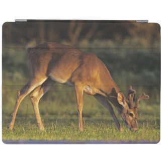 White-tailed Deer, Odocoileus virginianus, 4 iPad Cover