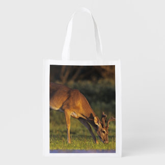 White-tailed Deer, Odocoileus virginianus, 4 Reusable Grocery Bags