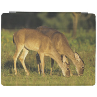 White-tailed Deer, Odocoileus virginianus, 5 iPad Cover