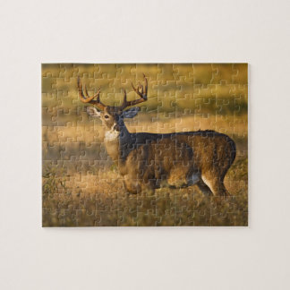 White-tailed Deer (Odocoileus virginianus) adult Jigsaw Puzzle