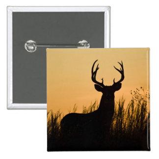 white-tailed deer Odocoileus virginianus) 2 Inch Square Button