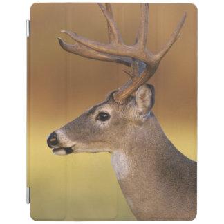White-tailed Deer, Odocoileus virginianus, iPad Cover