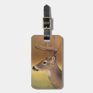 White-tailed Deer, Odocoileus virginianus, Luggage Tag
