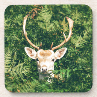 White-Tailed Deer Peeking Out of Bushes Coaster