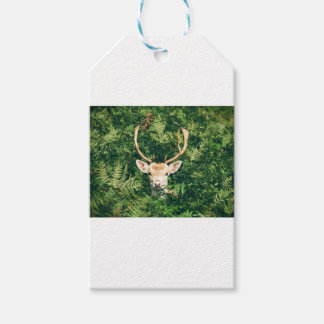 White-Tailed Deer Peeking Out of Bushes Gift Tags