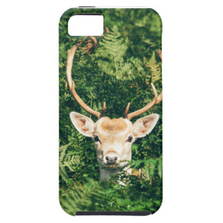 White-Tailed Deer Peeking Out of Bushes iPhone 5 Cover