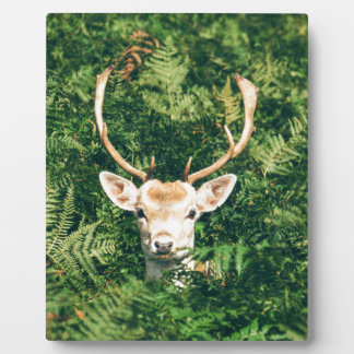 White-Tailed Deer Peeking Out of Bushes Plaque