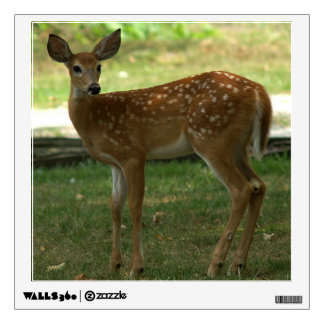 White-tailed Deer, Wall Decal. Wall Sticker