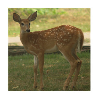 White-tailed Deer, Wood Print. Wood Print