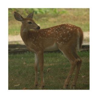 White-tailed Deer, Wood Print. Wood Wall Decor