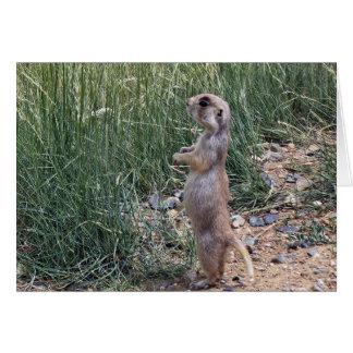 White-tailed prairie dog card