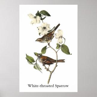 White-throated Sparrow - John Audubon Print