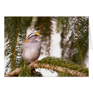 White Throated Sparrow Note Cards