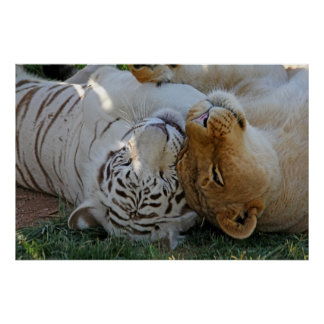 White Tiger and Lion Pals Poster