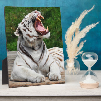 White Tiger, Bengal Tiger Photo Plaque