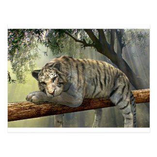 White tiger chilling in the jungle postcard