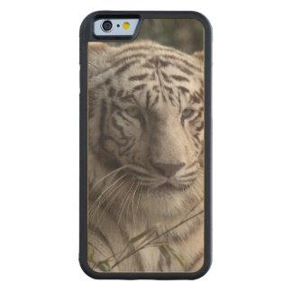 White Tiger Close-up Maple iPhone 6 Bumper Case