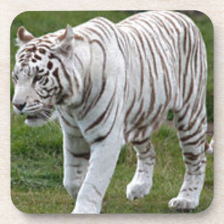 White Tiger Drink Coasters