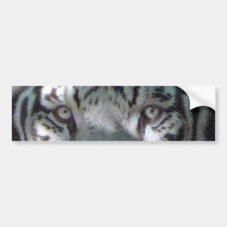 White Tiger Eyes Bumper Sticker