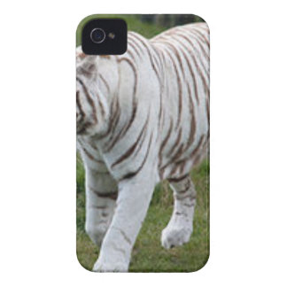 White Tiger iPhone 4 Covers