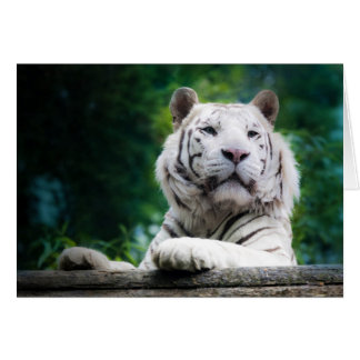 White Tiger (v1) Note Card Personalize