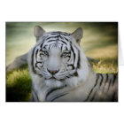 White Tiger (v2) Greeting Card Personalize