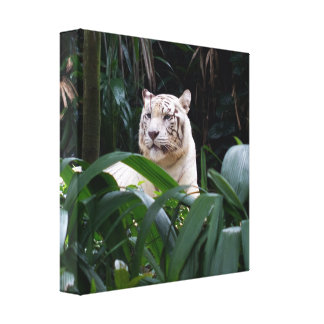 White Tiger  Wrapped Canvas