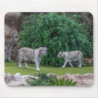 White tigers mousepad