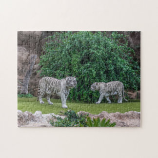 White tigers photo puzzle