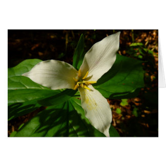 White Trillium Flower Spring Wildflower Card