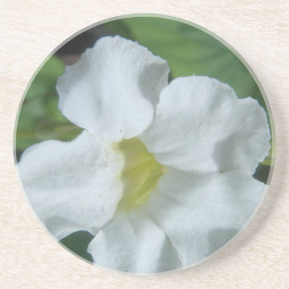 White Tropical Flower Found on Fiji Beverage Coasters