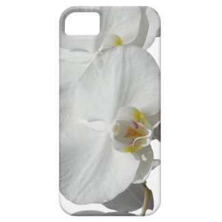 White Tropical Orchids iPhone 5 Cover
