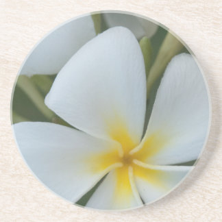White Tropical Plumeria Flower From Fiji Drink Coaster