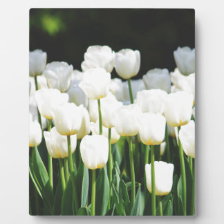 White Tulip Plaque