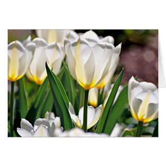 White Tulips with Yellow Feathers Card