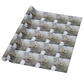 white turkish angora cat  wrapping paper