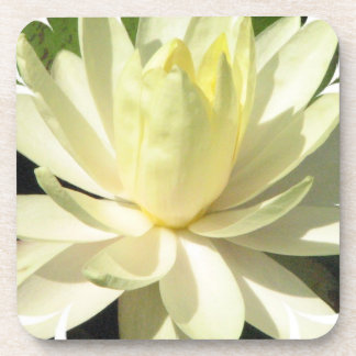 White Water Lily Set of Coasters